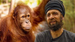Volunteers Review the Nyaru Menteng Orangutan Sanctuary in Borneo  |  The Great Projects