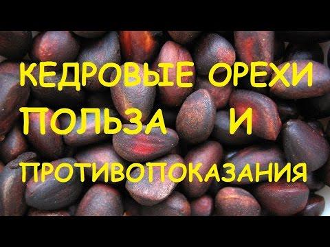 Кедровые орехи. Полезные свойства и противопоказания.
