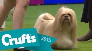 Kennel Club Junior Warrant Winner of the Year Final | Crufts 2015