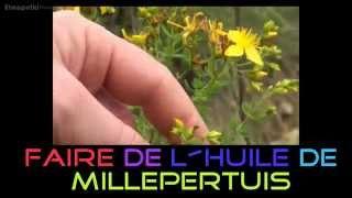 Comment faire son huile de Millepertuis / St John's wort / Hipérico / Зверобой продырявленный