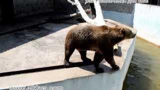 животные, посетители кормят мишек, Харьков, зоопарк