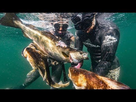 Wreck Spearfishing In Denmark - Record Pollock & Cod