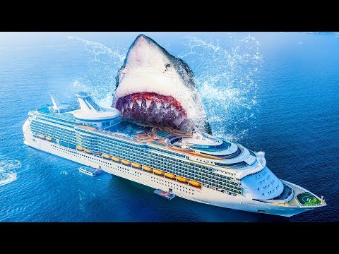 10 Facts About the Biggest Shark Ever Existed