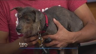Pet Of The Week: Paco
