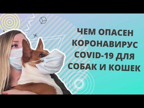 Опасен ли коронавирус COVID-19 для собак и кошек? Чем занятся на карантине со своим питомцем?