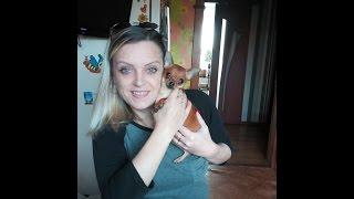 Самая маленькая собака породы Чихуахуа в России