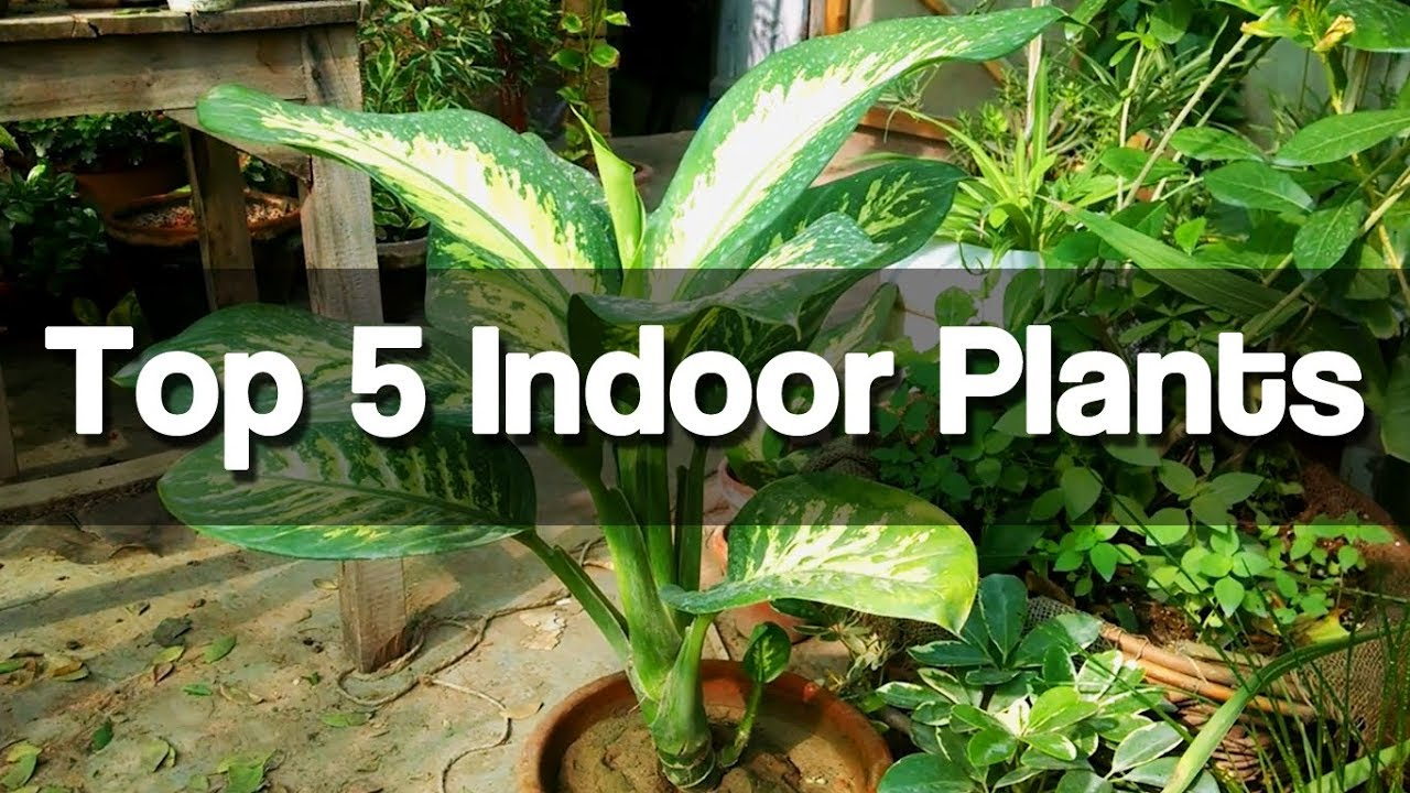 Top 5 best indoor plants easy to grow indoor plants for Easy to grow houseplants