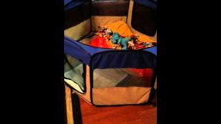 Parker Maltese, play pen idea for potty training