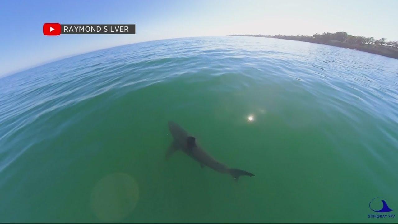 Santa Cruz Community Mourns Man Killed in Shark Attack
