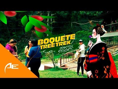 Café Geisha y su impacto en Panamá || Boquete Tree Trek
