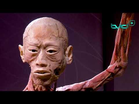 Expo 'REAL BODIES' opent voor een ethousiast publiek