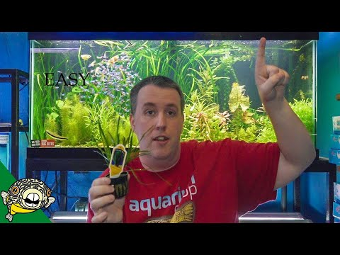 Top 5 Easy Aquarium Plants