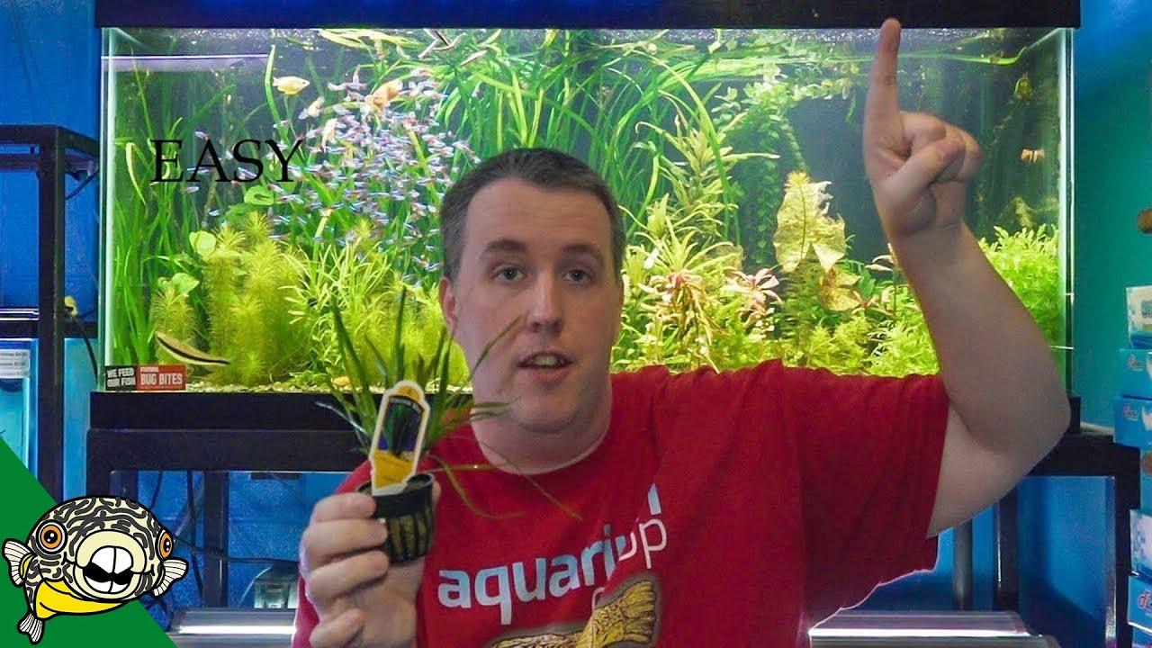 top 5 easy aquarium plants youtube