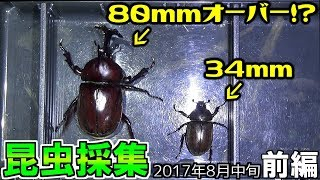 今年のカブクワ採集もそろそろ終わりですね~ 【2017年昆虫採集(カブク...