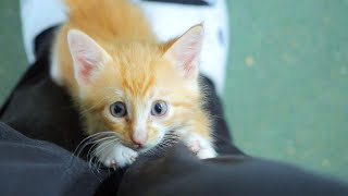 Kittens Growing Cute And Playful | Four Little Warriors