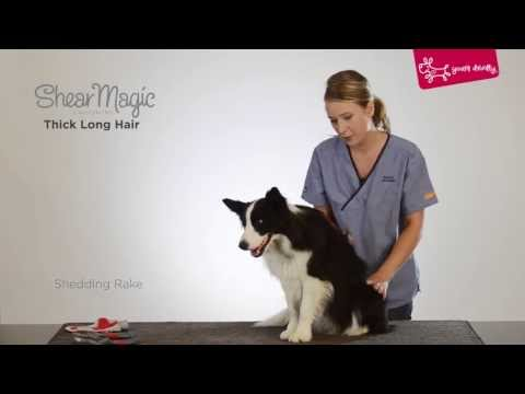 Yours Droolly - Grooming a thick and long hair dog with Shear Magic grooming tools