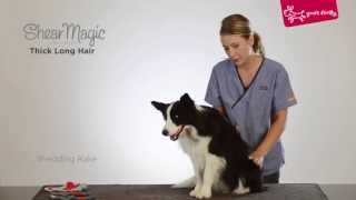 Yours Droolly  Grooming a thick and long hair dog with Shear Magic grooming tools