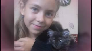 Мои любимые кошки!!! Я их так сильно люблю!!!