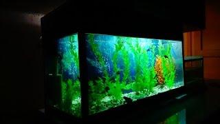 Мой аквариум на 100л.(начал все с нуля).