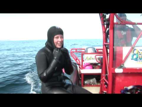 Close Encounters: Snorkeling with Whales | Snorkeling with Humpback Whales in Newfoundland