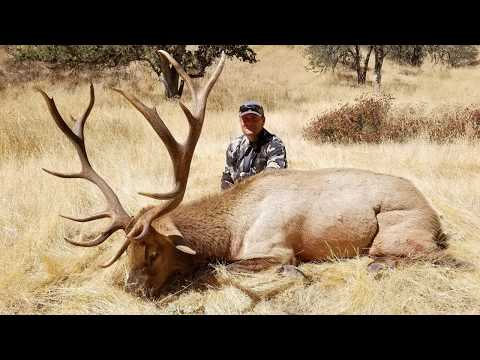 Archery Tule Elk Hunt - Oak Stone Outfitters