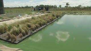 Сточные воды в Австралии очищают травой (новости)(, 2016-04-11T11:59:00.000Z)
