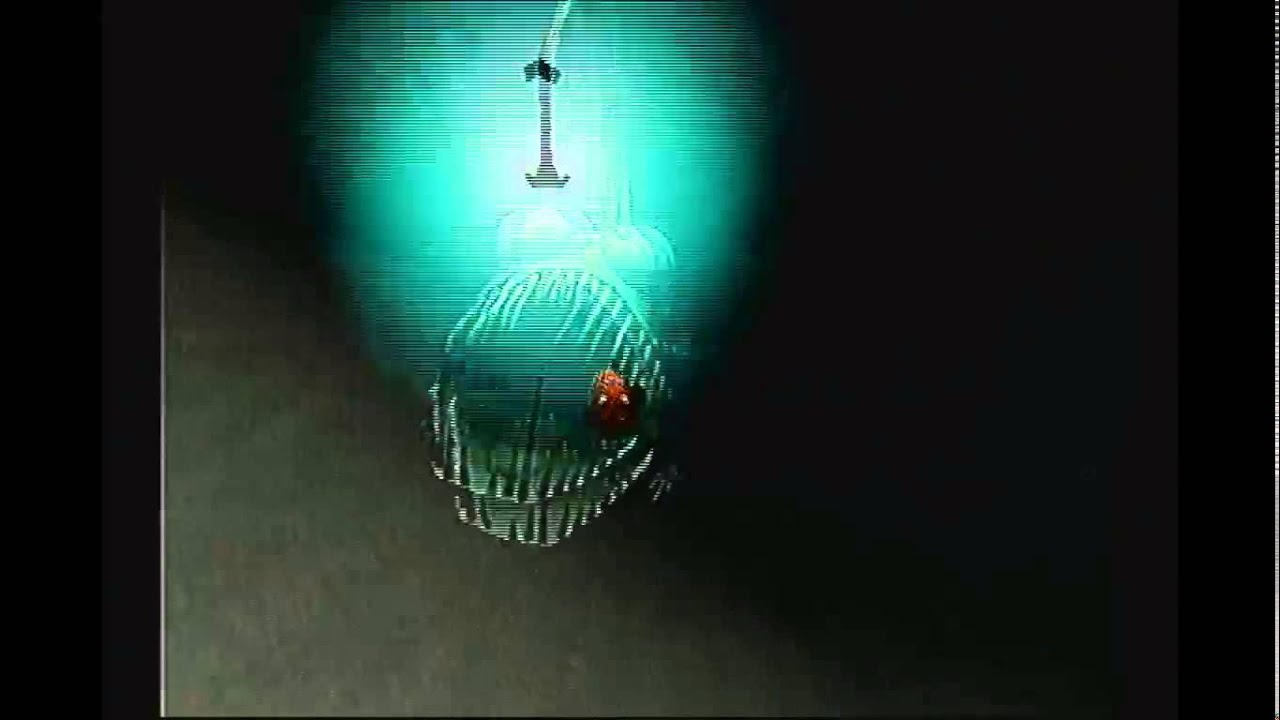 33   Beauty Angler Fish Finding for angler fish finding nemo ride  76uhy