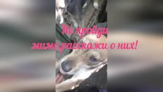 Харьков. Приют для животных Ковчег Милосердия.