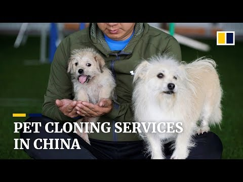 Chinese company clones famous screen pooch Juice