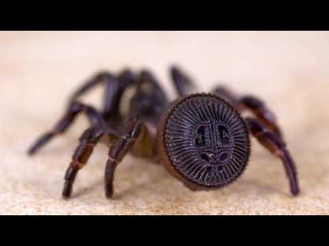 10 Самых поразительных пауков в мире