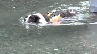 2013年9月22日 四週連続雨の為に延期になった海部川川遊びが、五週目で...