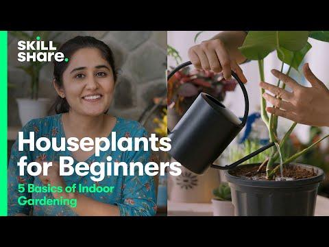 Houseplants for Beginners: 5 Basics for Gardening Indoors