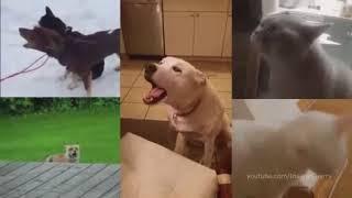 Животные поют Gorillaz