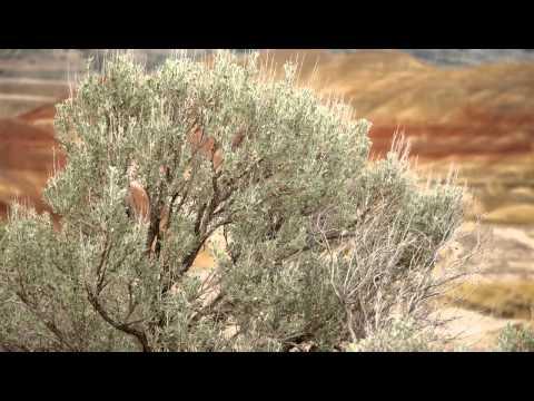 Oregon's Painted Hills, Jim Lewis Photography.mp4