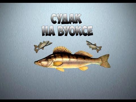 Русская рыбалка 3.99 Судак на Вуоксе