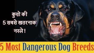 Dangerous dog breeds in world | कुत्तो की 5 सबसे खतरनाक नस्ले |