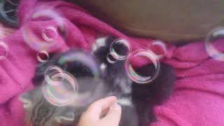 My newborn kittens