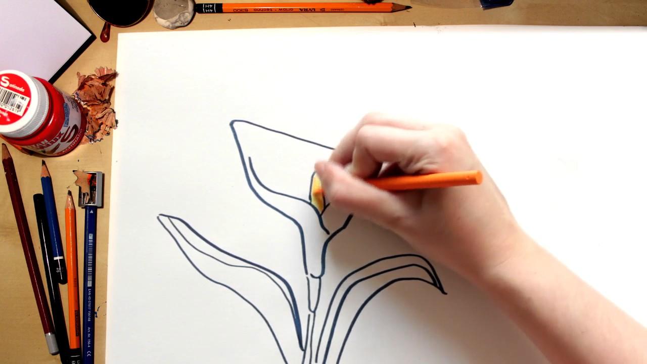 Como Dibujar Una Flor Lirio Comentado