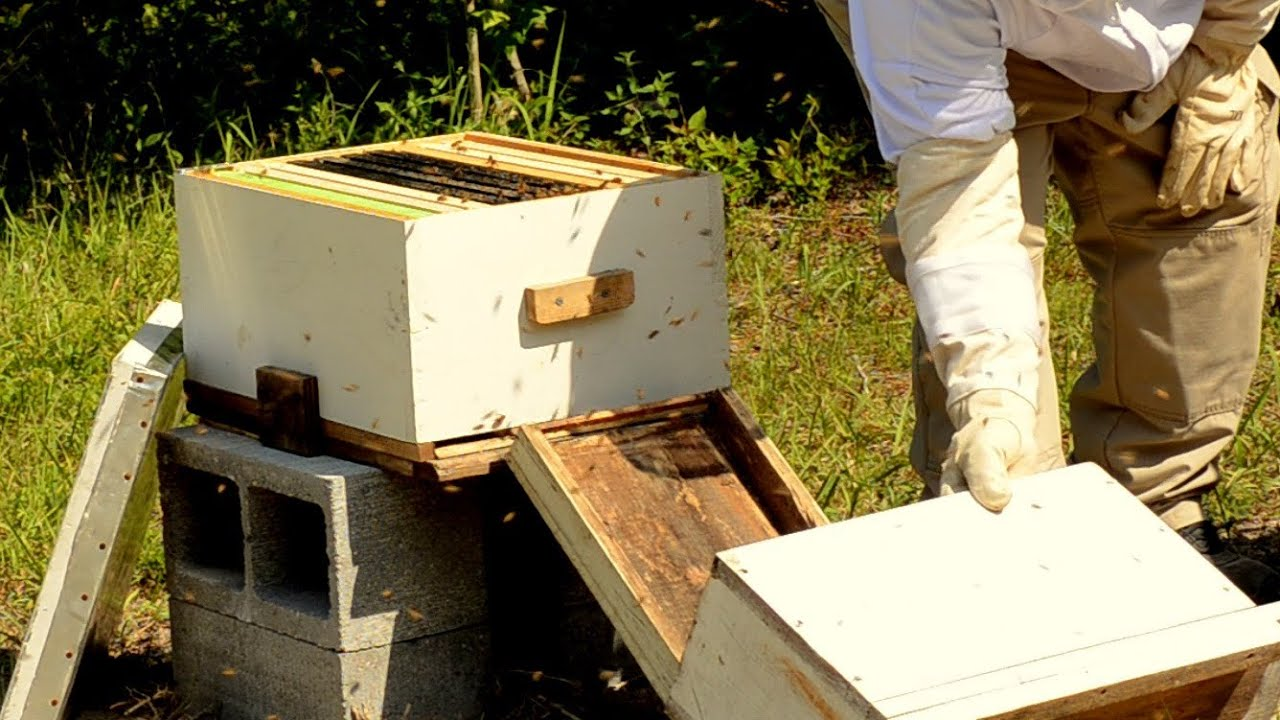 Nukleus: what is it Why do beekeepers need a nucleus