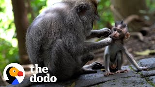 Here's To The Moms — Happy Mother's Day | The Dodo