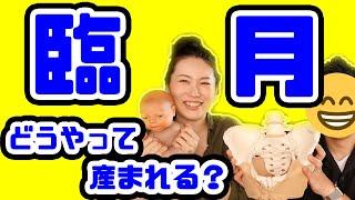 【臨月】赤ちゃんってどうやって産まれるの?出産直前に夫婦でお勉強!【妊娠Vlog Vol.25】