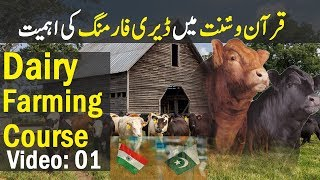 Desi Murghi Poultry Farming Pakistan   Golden Hens Farming