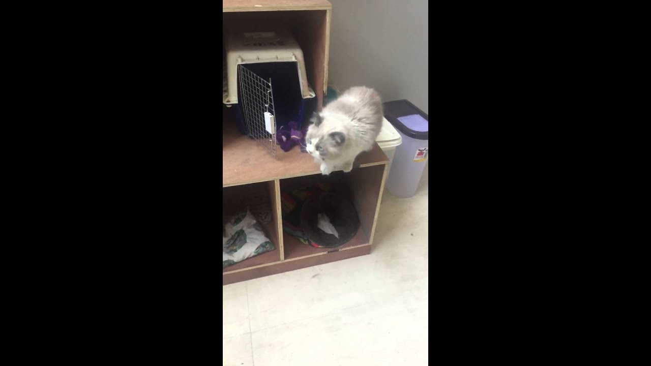 Cat scared to jump. - YouTube