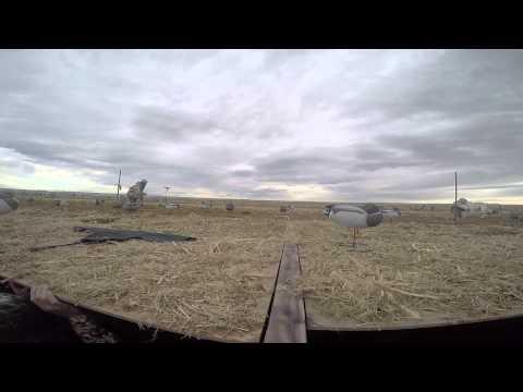 141122 Duck Goose Hunt Wellington CO