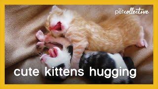 Cute Kittens Hugging