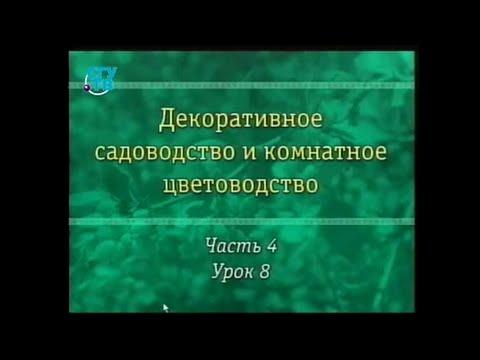 Вопрос: Какое растение на Руси называли свадебным деревом?