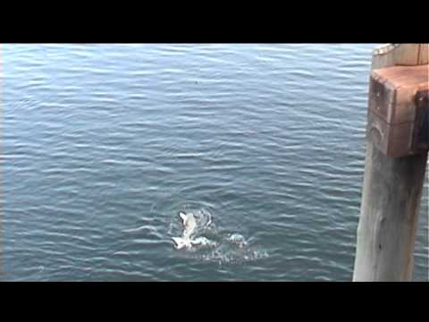 Fishing Seisia Wharf Cape York