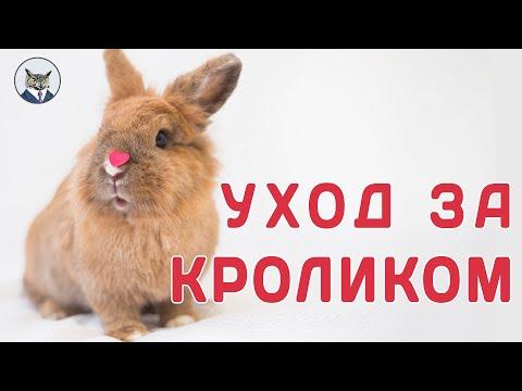 Как ухаживать за кроликом в квартире ( декоративный кролик)