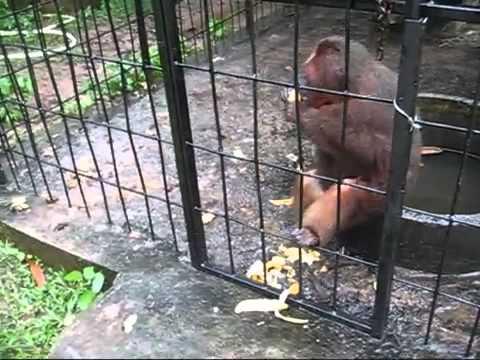Crazy Monkey's banana split smash