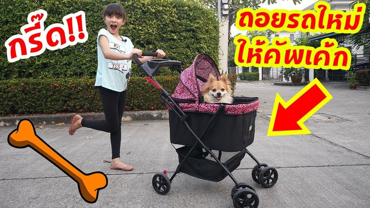 บรีแอนน่า   🐶 ถอยรถใหม่ให้น้องหมาคัพเค้กสุดที่รัก!! Capcake's new stroller!!